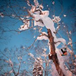 Snowboard-Photo-Rene-Schnoeller-Japan-by-Rudi-Wyhlidal