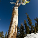 Snowboard-Photo-Anne-Flore-Marxer-Tree-Jib-Mammoth-Superpark-USA-Photo-Vaness-Andrieux